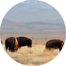 Improve-the-economic-sustainability-of-ranches