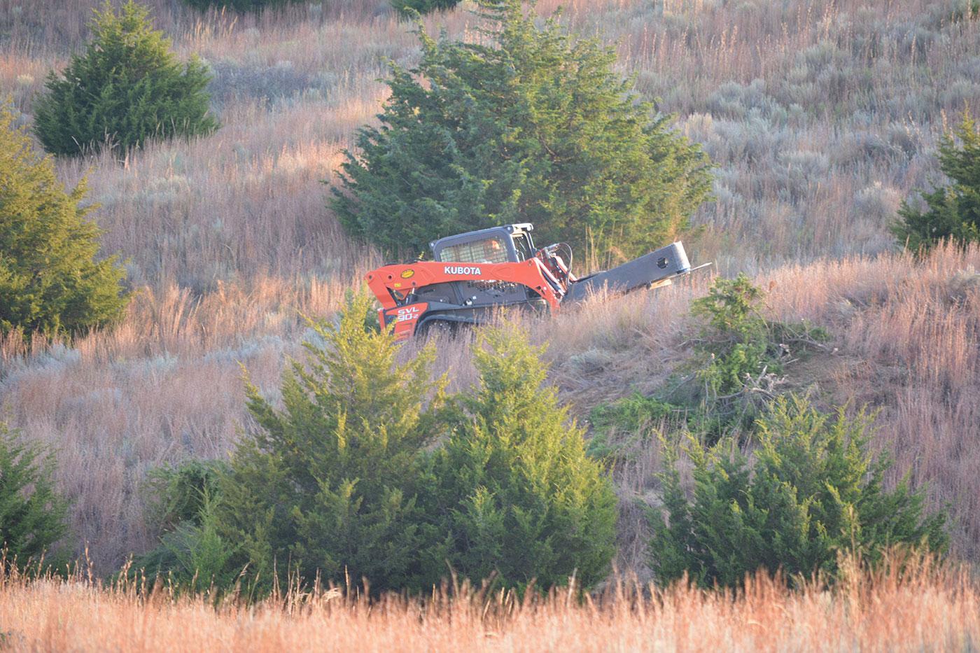 Burnette Ranch Cedar Saw