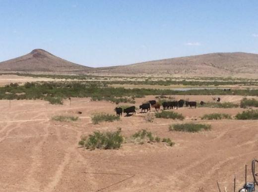 Rancho Lujo Barato