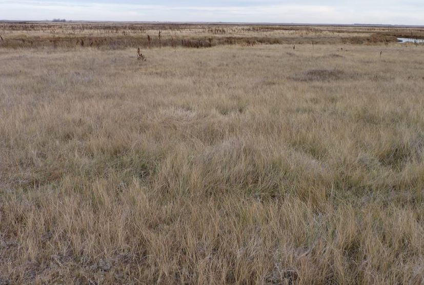 Stockpiled Native Grass